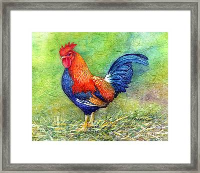 Rooster  Framed Print by Hailey E Herrera
