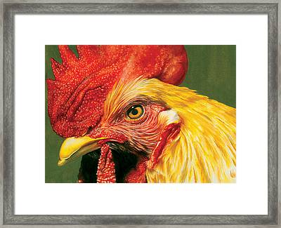 Rooster Framed Print by Kelly Gilleran