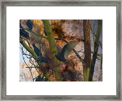 Roosting Vultures Framed Print by J Larry Walker
