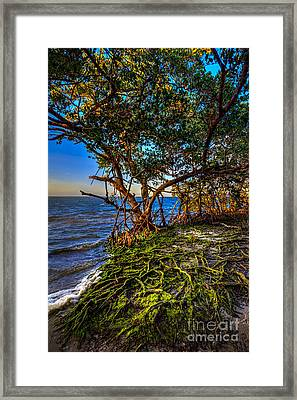Rooted In Truth Framed Print by Marvin Spates