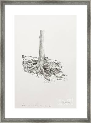 Roots Framed Print by Cheryl E Adams