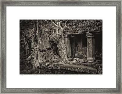 Roots In Ruins 7 Framed Print by Hitendra SINKAR