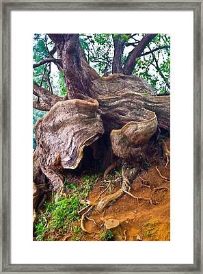Roots Framed Print by Matt Radcliffe