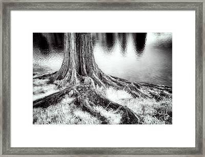 Roots Run Deep - Greensboro Nc Framed Print by Dan Carmichael