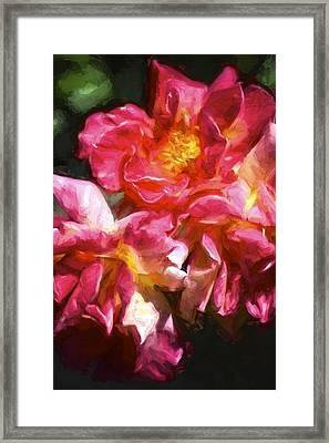 Rose 115 Framed Print by Pamela Cooper