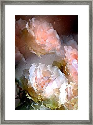Rose 154 Framed Print by Pamela Cooper