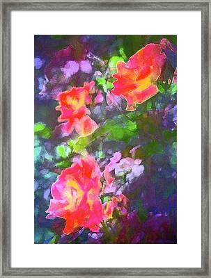 Rose 192 Framed Print by Pamela Cooper
