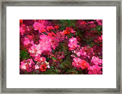 Rose 202 Framed Print by Pamela Cooper