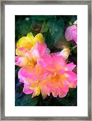 Rose 211 Framed Print by Pamela Cooper