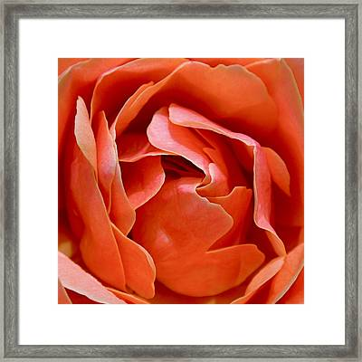 Rose Abstract Framed Print by Rona Black