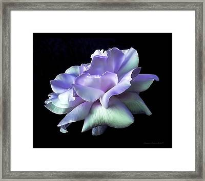 Rose Awakening Floral Framed Print by Jennie Marie Schell