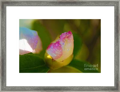 Rose Bud Framed Print by Cheryl Young