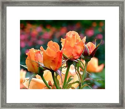 Rose Bunch Framed Print by Rona Black