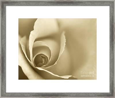 Rose Close Up - Gold Framed Print by Natalie Kinnear
