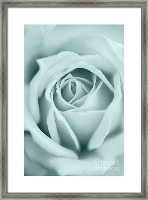Rose Closeup In Monochrome Framed Print by Vishwanath Bhat