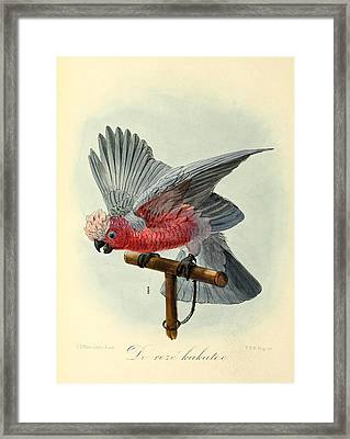 Rose Cockatoo Framed Print by J G Keulemans