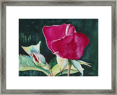 Rose Coming To Life Framed Print by Judy Loper