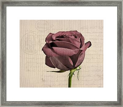 Rose En Variation - S02c3t3a Framed Print by Variance Collections