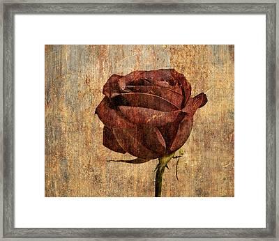 Rose En Variation - S22ct05 Framed Print by Variance Collections