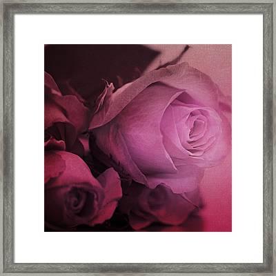 Rose Framed Print by Heike Hultsch