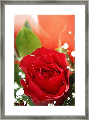 Rose Framed Print by Les Cunliffe