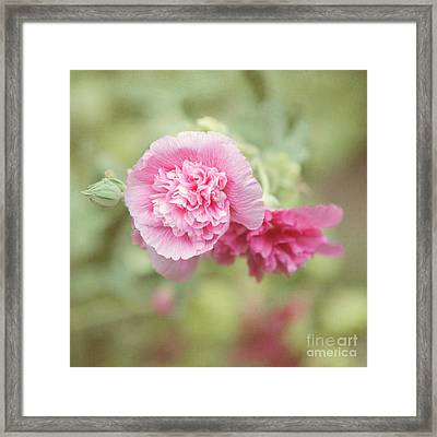 Rose Of Sharon Framed Print by Kay Pickens