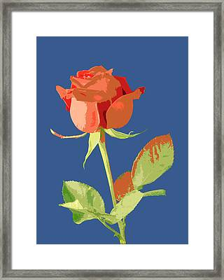 Rose On Blue Framed Print by Mauro Celotti