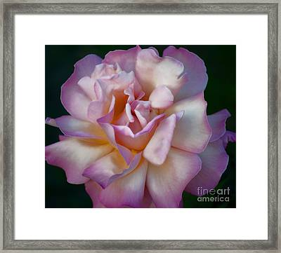 Rose Petals Straight From My Heart Framed Print by Gwyn Newcombe
