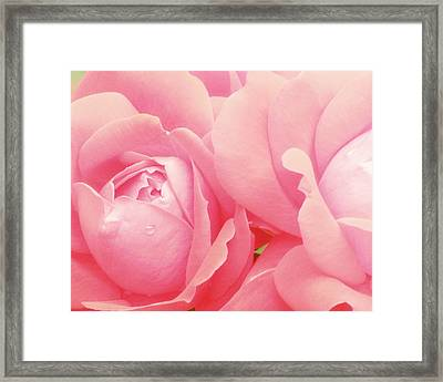 Rose Photography Pink Roses Pink Flower Photography Baby Girl Nursery Art Soft Girly Pink Wall Art Framed Print by Amy Tyler