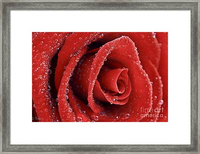 Rose Red  Framed Print by Tracy  Hall