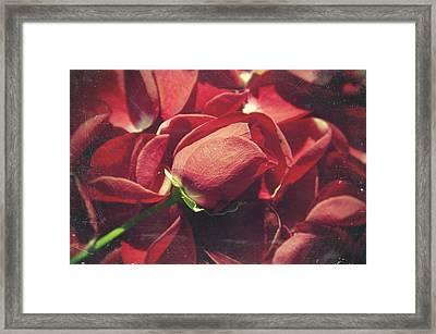 Rose Framed Print by Taylan Soyturk