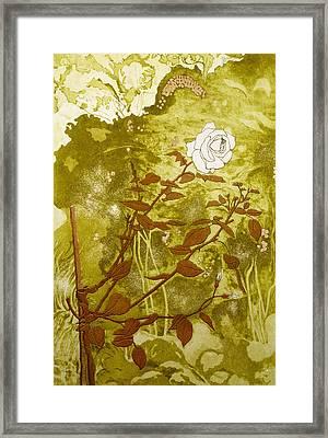 Rose Framed Print by Valerie Daniel