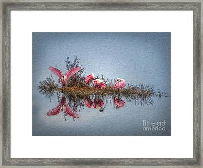 Roseate Spoonbills At Rest Framed Print by Lianne Schneider