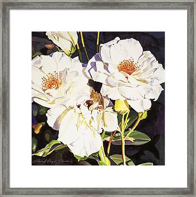 Roses Blanc Framed Print by David Lloyd Glover