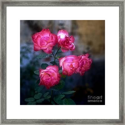 Roses II Framed Print by Silvia Ganora