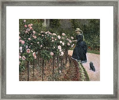 Roses In The Garden At Petit Gennevilliers Framed Print by Gustave Caillebotte