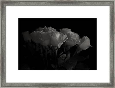 Roses Framed Print by Mario Celzner