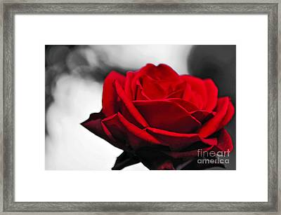 Rosey Red Framed Print by Kaye Menner