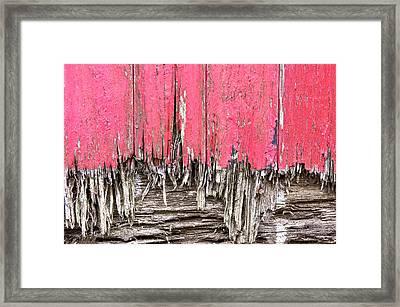 Rotten Wood Framed Print by Tom Gowanlock