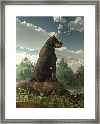 Rottweiler  Framed Print by Daniel Eskridge