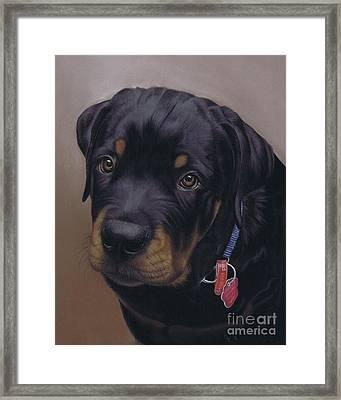 Rottweiler Dog Framed Print by Karie-Ann Cooper