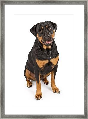 Rottweiler Dog With Drool Framed Print by Susan  Schmitz