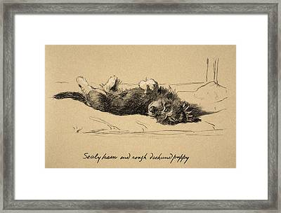 Rough Daschund Puppy Detail, 1930 Framed Print by Cecil Charles Windsor Aldin