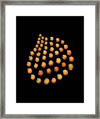 Rough Periwinkle Sea Snail Shells Framed Print by Gilles Mermet
