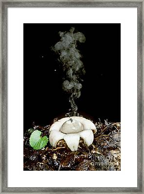 Rounded Earthstar Framed Print by Jeffrey Lepore
