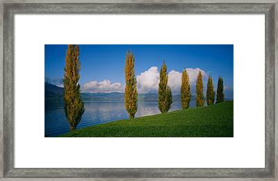 Row Of Poplar Trees Along A Lake, Lake Framed Print by Panoramic Images