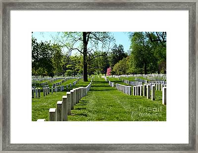 Row Upon Row Framed Print by Patti Whitten