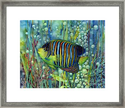 Royal Angelfish Framed Print by Hailey E Herrera