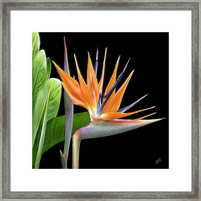 Royal Beauty I - Bird Of Paradise Framed Print by Ben and Raisa Gertsberg