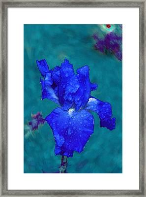 Royal Blue Iris Framed Print by Viktor Savchenko
